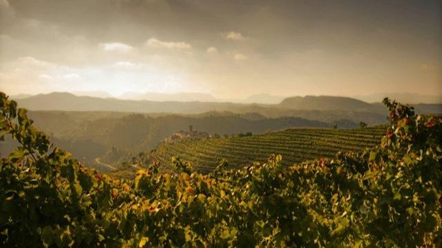 Wine - El Figueral Rural Tourism Spain
